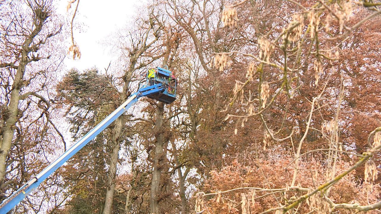 World's tallest hedge gets trim for first time in 20 years