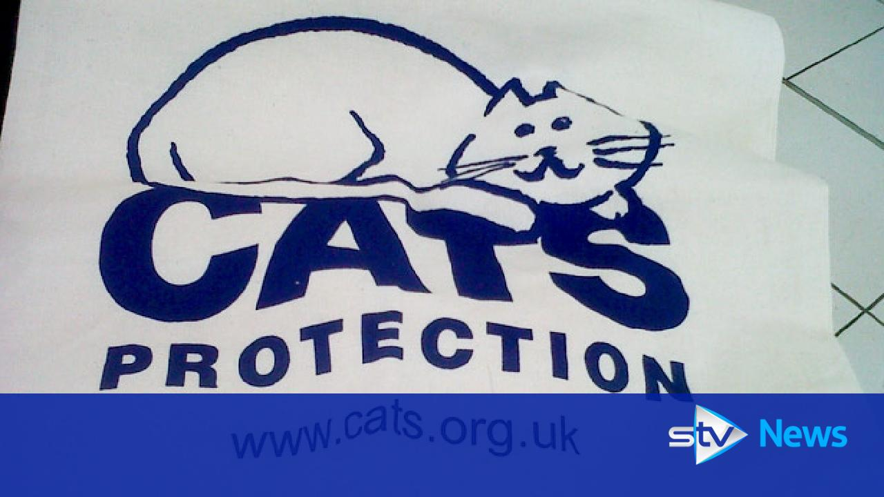 moray cat protection launches new web site. Black Bedroom Furniture Sets. Home Design Ideas