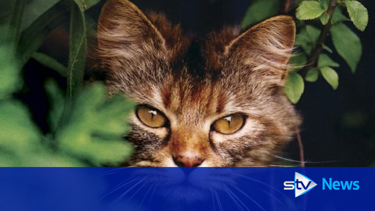 Edinburgh Cats Protection Email