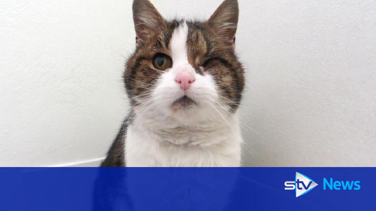 Cat Rescue Aberdeen