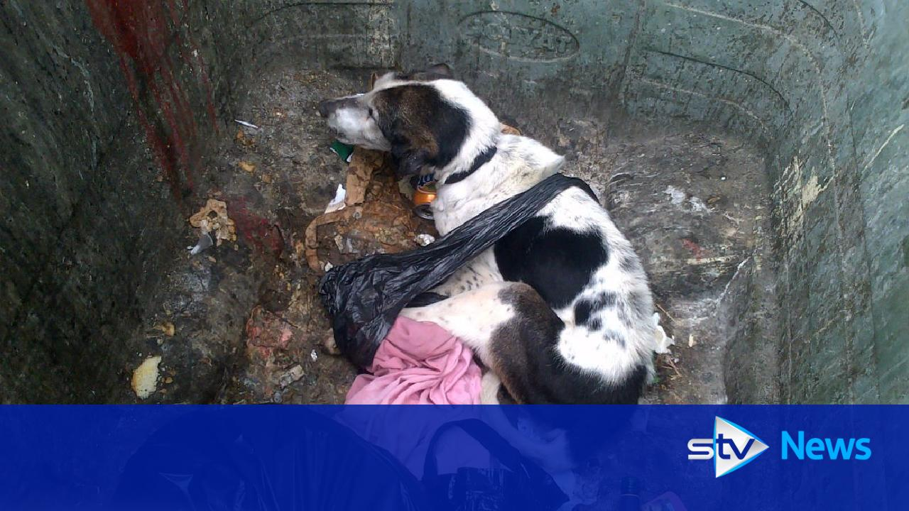 starving dog dumped in bin and left to die outside flats