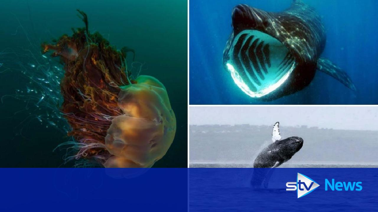 scotlands seas the wildlife off our coasts and where to