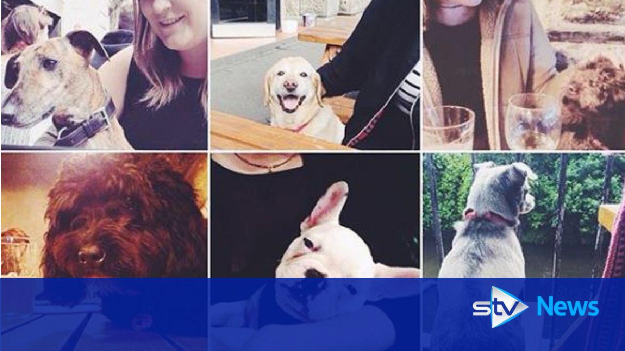 Pub Friendly Dogs Edinburgh