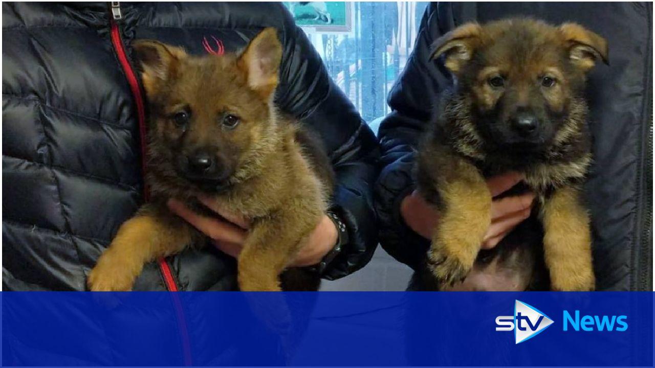 Cute paw patrol recruits training to collar criminals