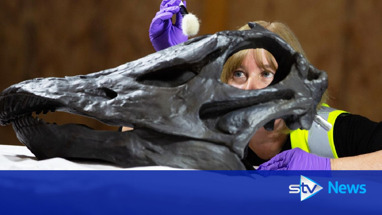 Dippy the dinosaur goes on display at Glasgow museum