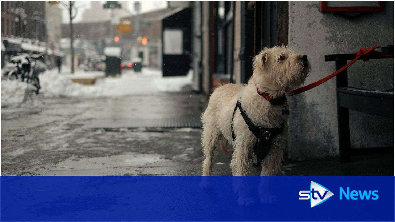New laws could increase prison terms for animal cruelty