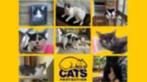 Moray Cats Protection