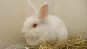 Zoe the rabbit is looking for a new home