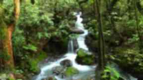 Tasmanian forest.