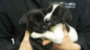 Puppies: Four animals were found dumped in a field.