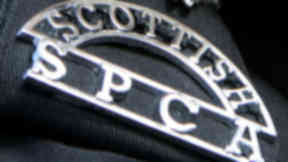 Scottish SPCA badge