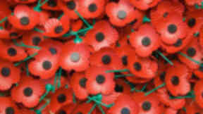 Scottish poppies poppyscotland remembrance appeal quality image. PR picture supplied by Poppyscotland, October 23 2013