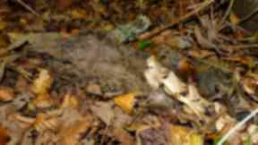 Woodland: The animal is thought to have been dead for months.