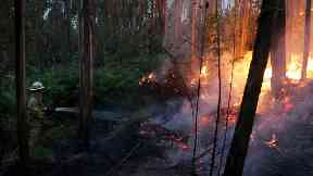 A lightning strike is believed to have sparked the devastating forest fires in Portugal.