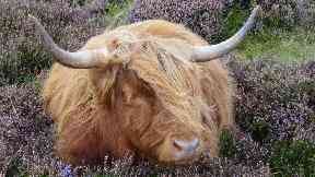 A wee nap in the heather by Louise Carle for Scotland from the roadside