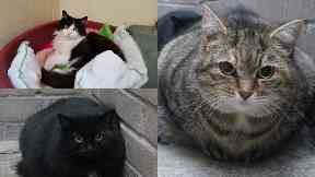 Cats looking for homes