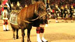 Royal Regiment of Scotland mascot Shetland pony Cruachan III.