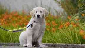 Guide dog scotland