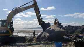 Scottish Marine Animal Stranding Scheme sperm whale autopsy