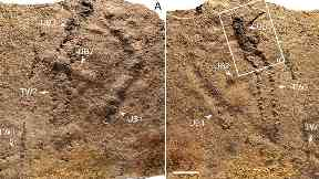 Scientists discover 'oldest footprints on Earth' in southern China
