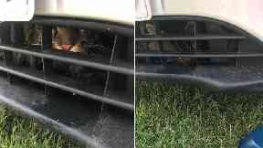 Cat stuck in car grille may have travelled 80 miles