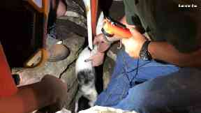 The moment deaf puppy Toffee is rescued from 50ft hole after being stuck for 30 hours