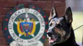 Colombia's cartels put bounty on dog who is the scourge of drug traffickers