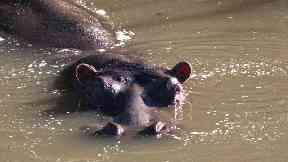 Tourist and fisherman killed in Kenya hippo attacks