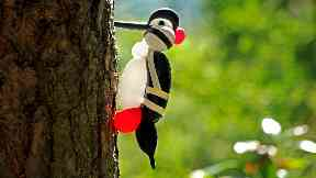 Woodpecker: In the wild.