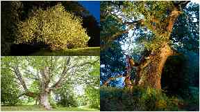 Tree of the Year: Some of the finalists in this year's competition.