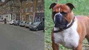Attack: The dog is to be put down. High Street Haddington