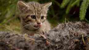 Wildcat kitten, Wildcat Haven