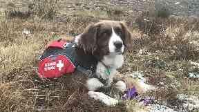 Avalanche rescue dog bodie