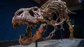 Roaring success: Trix the T-rex is coming to Glasgow.