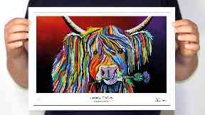 Steven Brown Art Limited, company behind McCoo range goes into liquidation