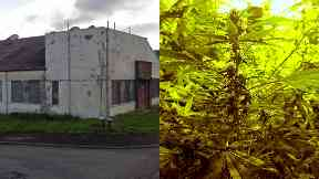 Cannabis: More than 600 plants were found. Port Glasgow