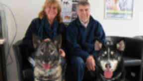 Alex and Isobel Arthur rehome husky duo Cleo and Mirren
