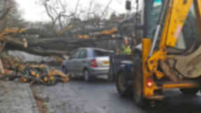 Storm: A tree struck a car in Quality Street in the Barnton area of Edinburgh.
