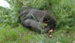 Three otters found dead in Haddington, East Lothian.