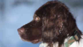 Sniffer dog: Rebus led officers to £100,000 worth of heroin. Police Scotland (ex Grampian Police) collect