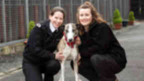 Maurice the lurcher with PhD student and Scottish SPCA researcher who took part in research into music's effect on dogs. Image from Scottish SPCA Monday March 2 2015.