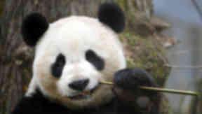 Yang Guang: Improvements to enclosure.