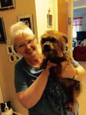 Toto was adopted after his owner was diagnosed with terminal illness.