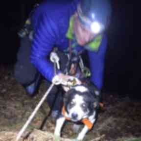 On the up and up: Abseilers carried sheepdog Nell to safety.