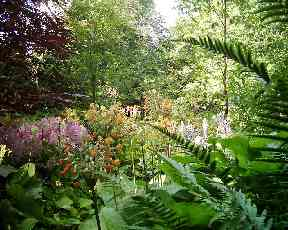 Wild garden at the House of Dun.