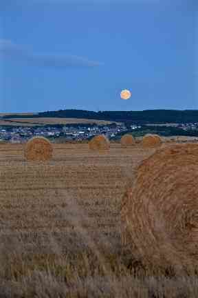A 'corn moon' is spotted on a clear September night.