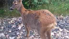 Deer hind: Two animals shot out of season