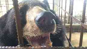 After: Nyan htoo with his tongue now removed.