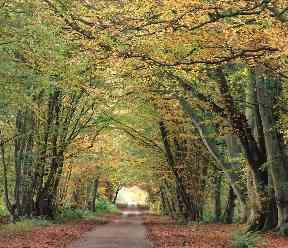 An archway of autumnal trees pictured in the Borders.