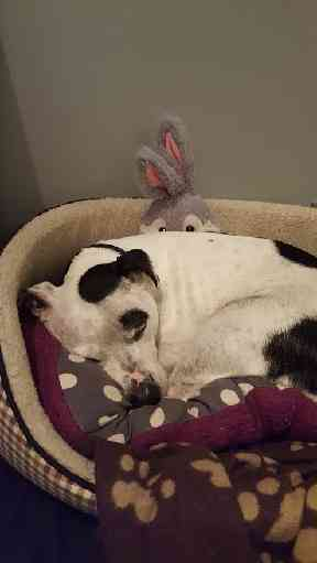 Buster and his favourite toy bunny.